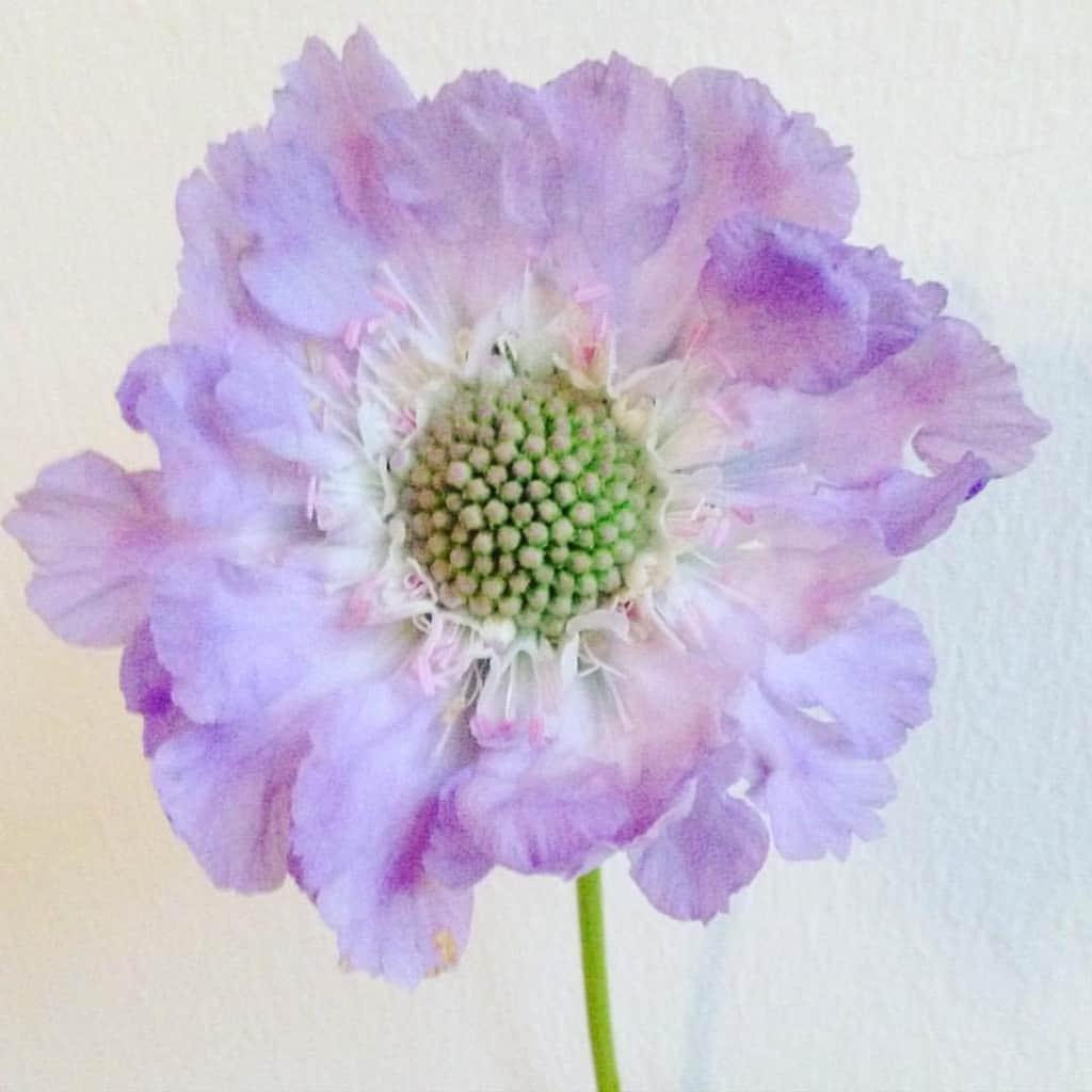 dagens blomst