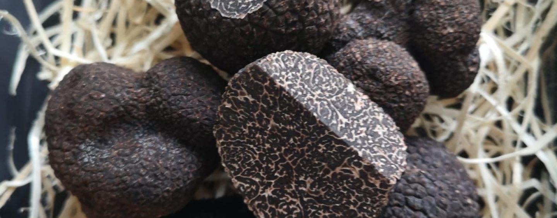 Brace inviterer på trøfler, caviar og perlende ølparringer til fire særevents i august