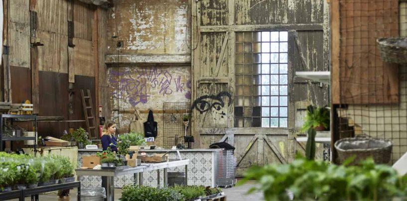 Ny grøn oase åbner i København: Byens Plantetorv
