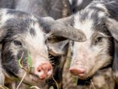 Farm Crawl med Foodwise og Madland